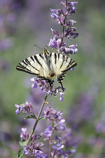 Farfalla giardino botanico Soldera