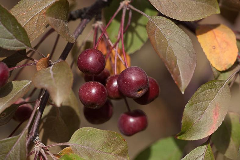 Giardino botanico Soldera Case Basse