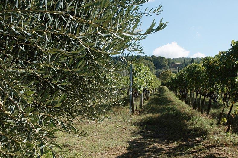 giardino botanico soldera case basse a montalcino (1)