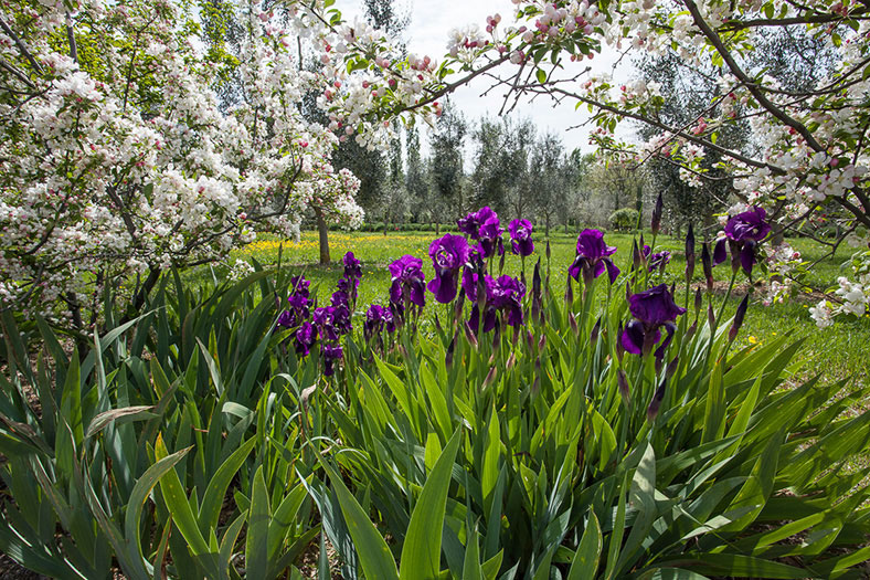 giardino botanico soldera case basse a montalcino (3)