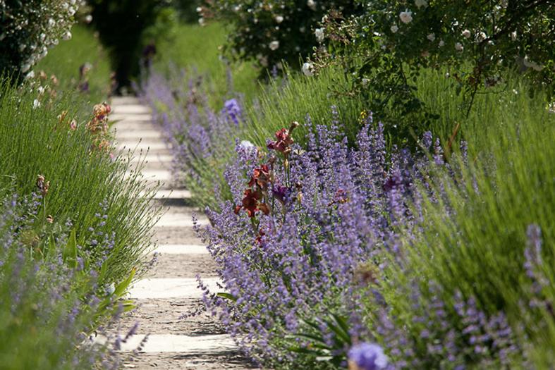 giardino botanico soldera case basse a montalcino (4)