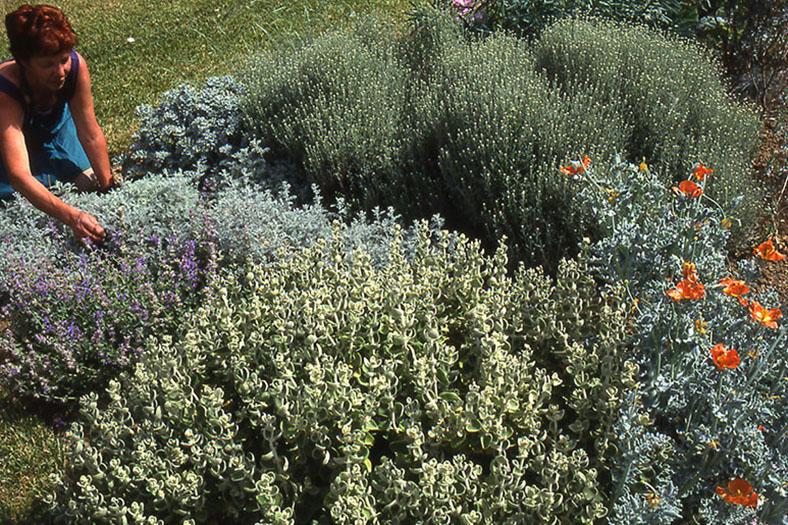 giardino botanico soldera case basse a montalcino (9)