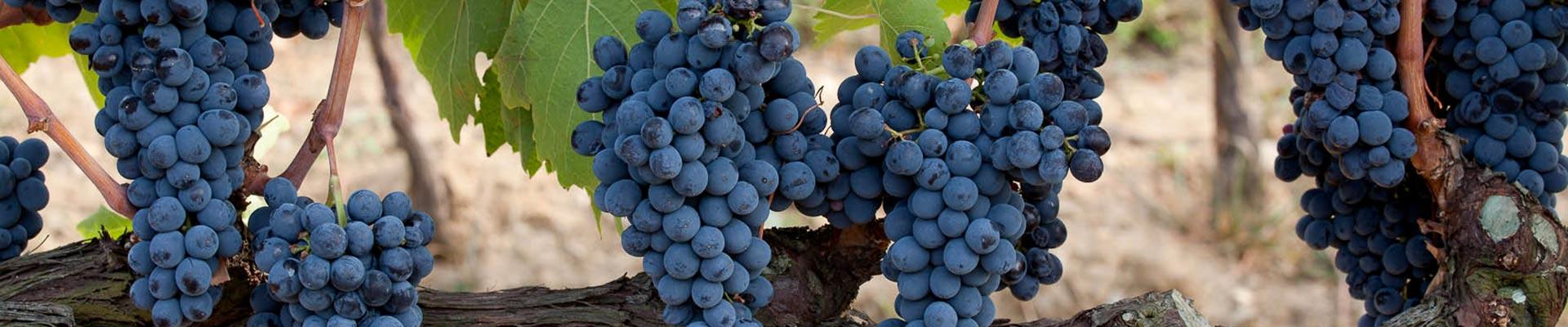 Vini Soldera per annata