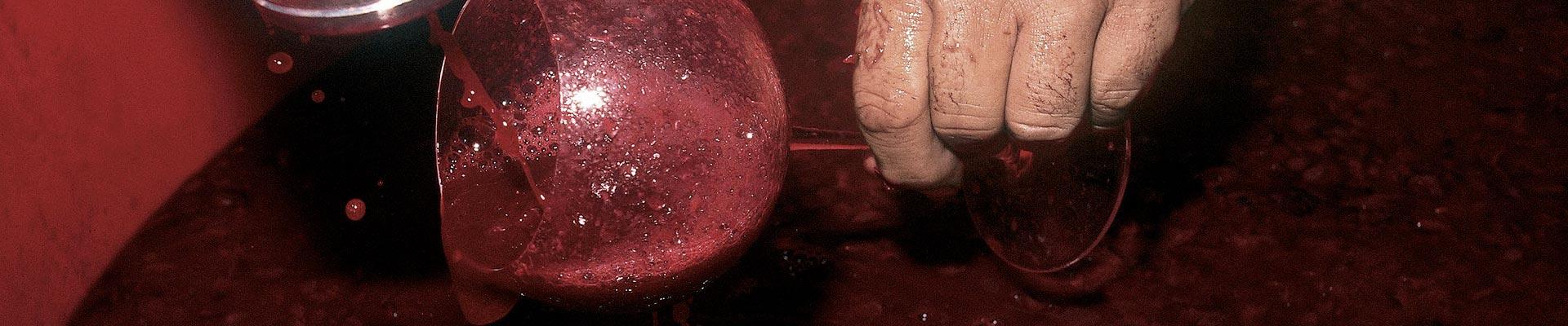 Vinificazione e invecchiamento vini Soldera - Case Basse